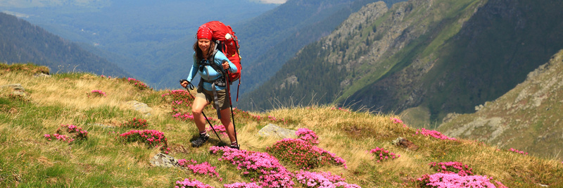 Hiking in Romanian mountains, explore the Carpathian garden