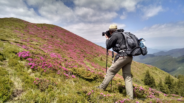 Hiking in Bucegi mountains, rhododendron tour in Transylvanian Alps